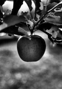 Vegelijk geen appels met peren. Waarom een transparante omrekeningsfactor belangrijk is.